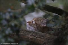 Wildpark_Lueneburger_Heide_270916_IMG_1110