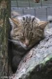 Wildpark_Lueneburger_Heide_270916_IMG_1121