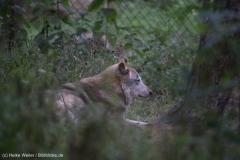 Wildpark_Lueneburger_Heide_270916_IMG_1137