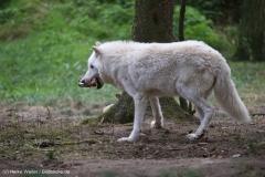 Wildpark_Lueneburger_Heide_270916_IMG_1142