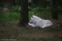 Wildpark_Lueneburger_Heide_270916_IMG_1154