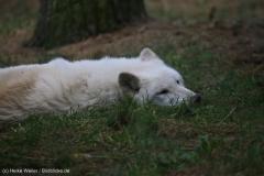 Wildpark_Lueneburger_Heide_270916_IMG_1171