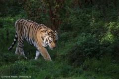 Wildpark_Lueneburger_Heide_270916_IMG_1202