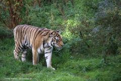 Wildpark_Lueneburger_Heide_270916_IMG_1205