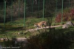 Wildpark_Lueneburger_Heide_270916_IMG_1214