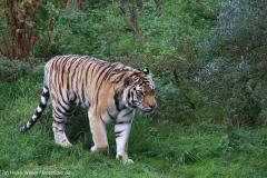 Wildpark_Lueneburger_Heide_270916_IMG_1234