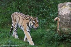 Wildpark_Lueneburger_Heide_270916_IMG_1239