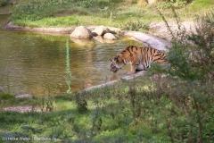 Wildpark_Lueneburger_Heide_270916_IMG_1255