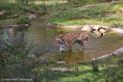 Wildpark_Lueneburger_Heide_270916_IMG_1277