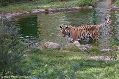 Wildpark_Lueneburger_Heide_270916_IMG_1283