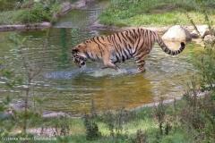 Wildpark_Lueneburger_Heide_270916_IMG_1307