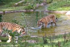 Wildpark_Lueneburger_Heide_270916_IMG_1312
