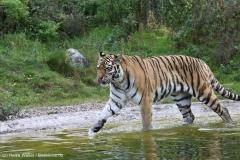 Wildpark_Lueneburger_Heide_270916_IMG_1441