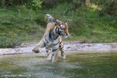 Wildpark_Lueneburger_Heide_270916_IMG_1448