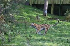Wildpark_Lueneburger_Heide_270916_IMG_1451
