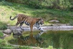 Wildpark_Lueneburger_Heide_270916_IMG_1474