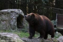 Wildpark_Lueneburger_Heide_270916_IMG_1646