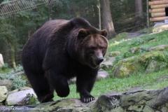 Wildpark_Lueneburger_Heide_270916_IMG_1653