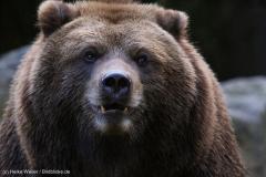 Wildpark_Lueneburger_Heide_270916_IMG_1661