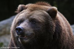 Wildpark_Lueneburger_Heide_270916_IMG_1664