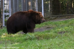 Wildpark_Lueneburger_Heide_270916_IMG_1674