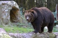 Wildpark_Lueneburger_Heide_270916_IMG_1676