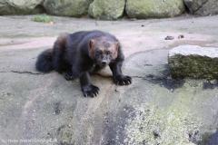 Wildpark_Lueneburger_Heide_270916_IMG_1820
