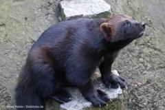 Wildpark_Lueneburger_Heide_270916_IMG_1842