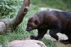 Wildpark_Lueneburger_Heide_270916_IMG_1861