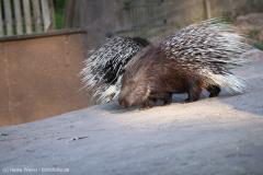 Wildpark_Lueneburger_Heide_270916_IMG_1866