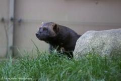 Wildpark_Lueneburger_Heide_270916_IMG_1888