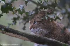 Wildpark_Lueneburger_Heide_270916_IMG_1046