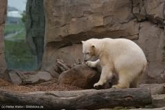 Zoo_am_Meer_Bremerhaven_060517_IMG_4681