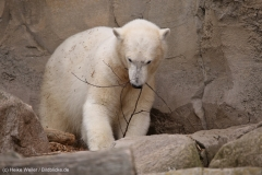 Zoo_am_Meer_Bremerhaven_060517_IMG_4685