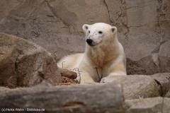 Zoo_am_Meer_Bremerhaven_060517_IMG_4690