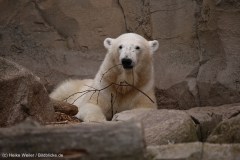 Zoo_am_Meer_Bremerhaven_060517_IMG_4696