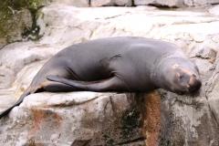 Zoo_am_Meer_Bremerhaven_060517_IMG_4703