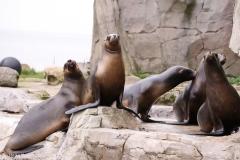 Zoo_am_Meer_Bremerhaven_060517_IMG_4707