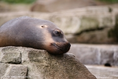 Zoo_am_Meer_Bremerhaven_060517_IMG_4710