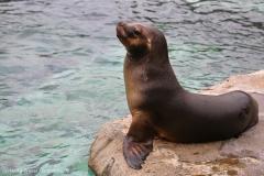 Zoo_am_Meer_Bremerhaven_060517_IMG_4713