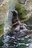 Zoo_am_Meer_Bremerhaven_060517_IMG_4716