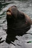 Zoo_am_Meer_Bremerhaven_060517_IMG_4722