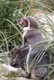 Zoo_am_Meer_Bremerhaven_060517_IMG_4734