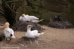Zoo_am_Meer_Bremerhaven_060517_IMG_4738