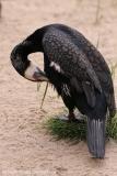 Zoo_am_Meer_Bremerhaven_060517_IMG_4742