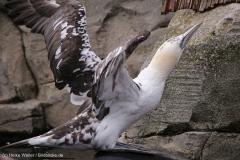 Zoo_am_Meer_Bremerhaven_060517_IMG_4744