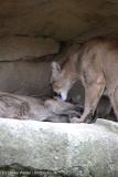 Zoo_am_Meer_Bremerhaven_060517_IMG_4795
