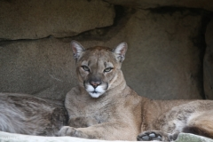 Zoo_am_Meer_Bremerhaven_060517_IMG_4818