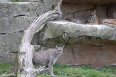 Zoo_am_Meer_Bremerhaven_060517_IMG_4822