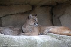 Zoo_am_Meer_Bremerhaven_060517_IMG_4830